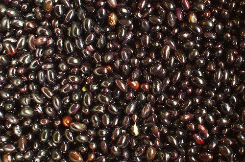黒千石大豆
